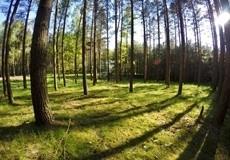Mierzęcin Trail